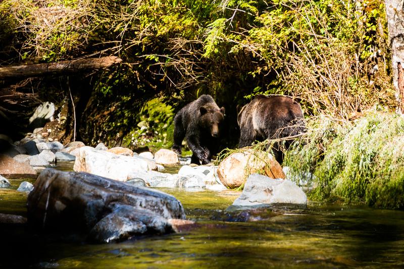 150910_GrizzlyForest_4482.jpg