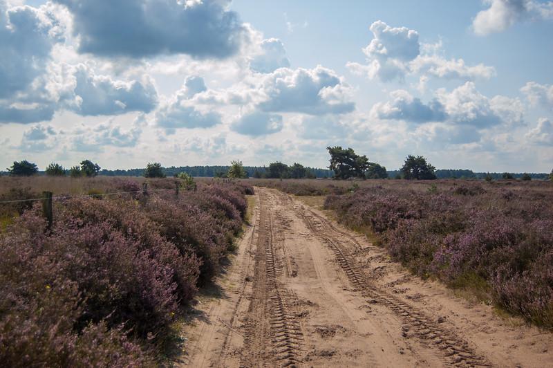 02 september 2017 Heidetocht 'De Wandelaar' te Achel & Gastel 15.jpg