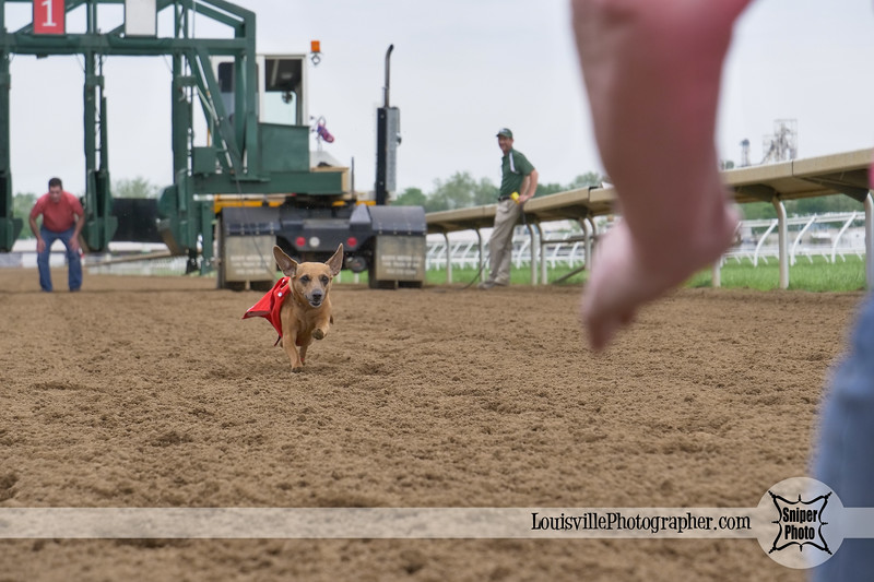 Belterra Park 2017 Wiener Dog Races-15.jpg