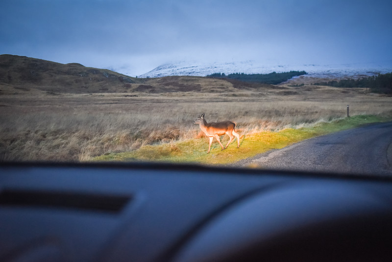 Orchy (2 of 16).jpg