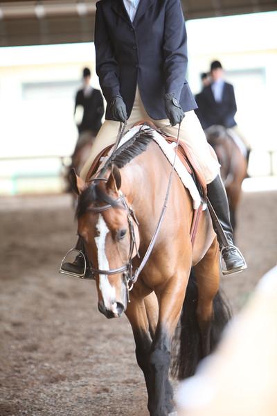 Youth Hunter Under Saddle