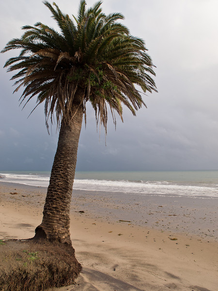 El Refugio state beach, not much of a refuge from the weather, but pretty.