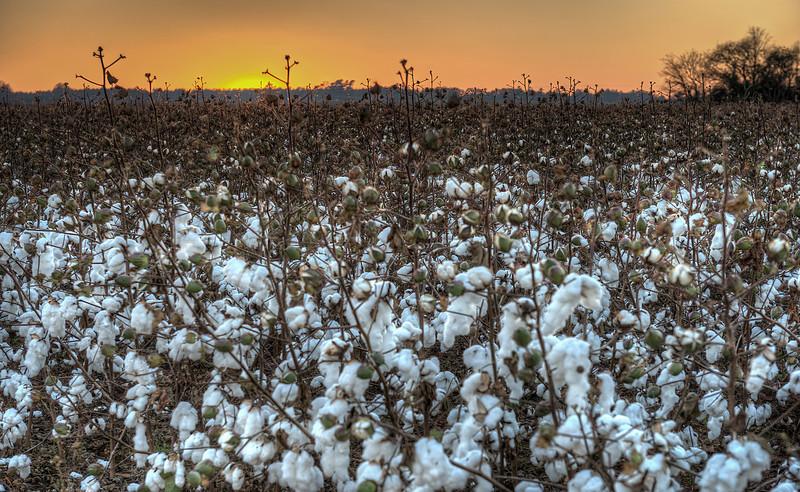 Cotton  http://sillymonkeyphoto.com/2012/12/23/cotton/
