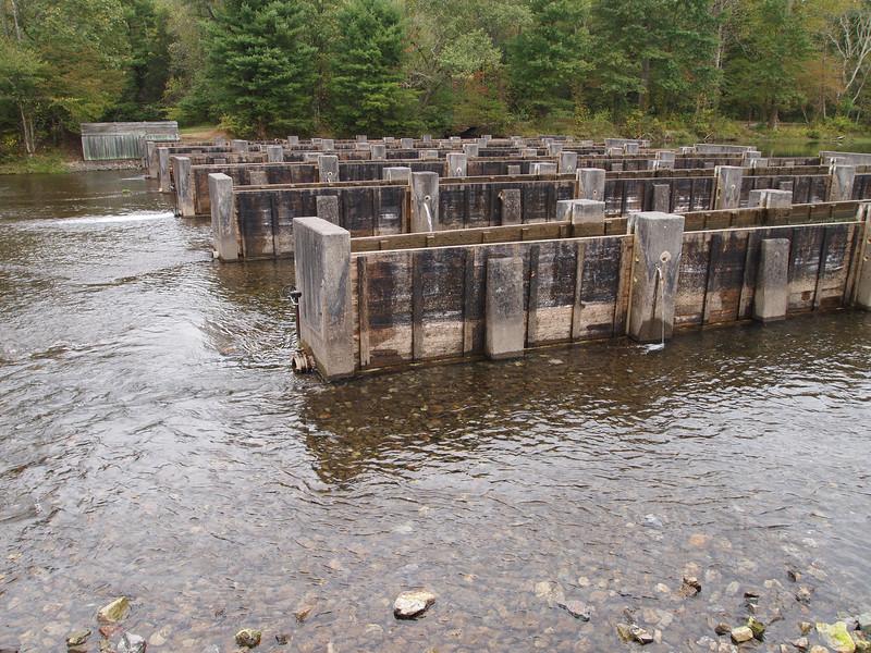 Near Holston Dam.
