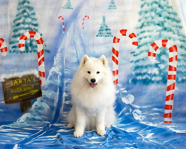 Christmas Photos - International Dog Club, Orlando