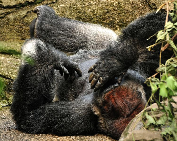 Zoo 06-17-2012 100.JPG