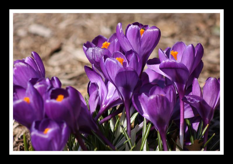 April 2, 2008 - 0015.JPG