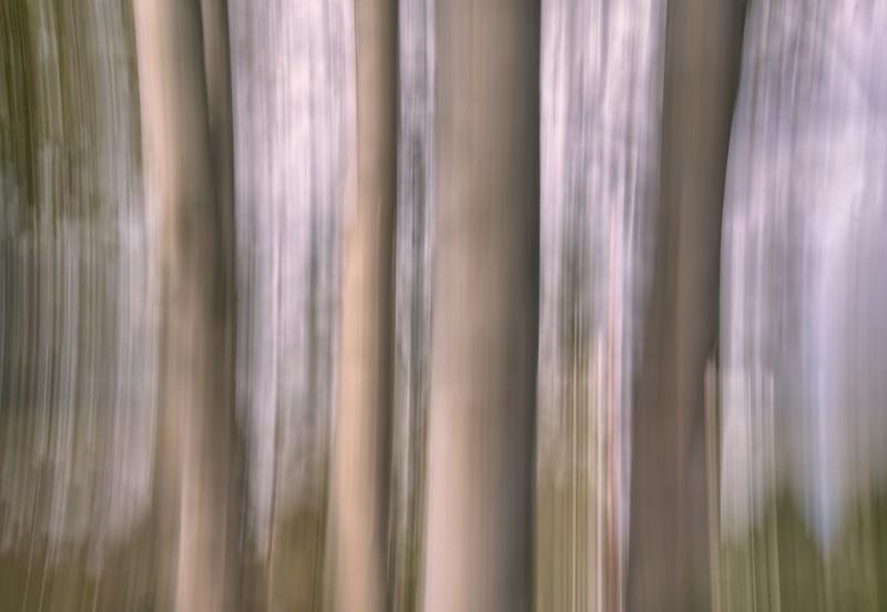 Birch Trees, Truro NS