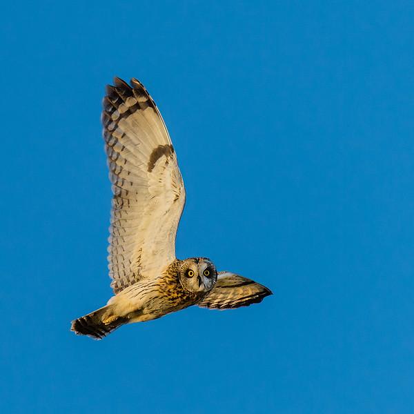108.Ken Miracle.1.Owl Scan.jpg