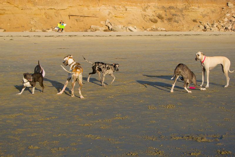 dogs_beach-41.jpg