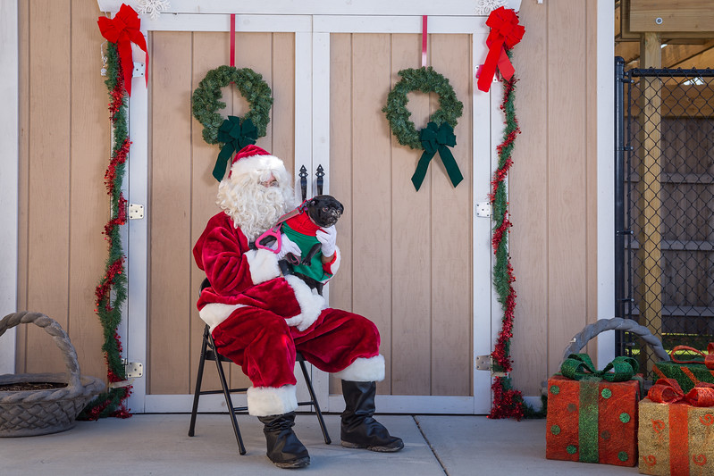 Pet Pictures With Santa-29.jpg