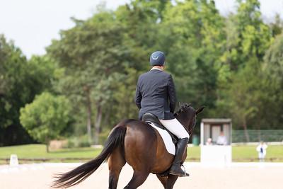 Horse 414