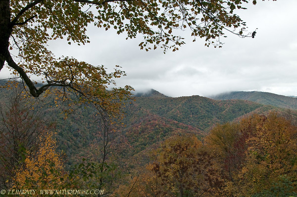 Smoky Mountains-Newfound Gap NC