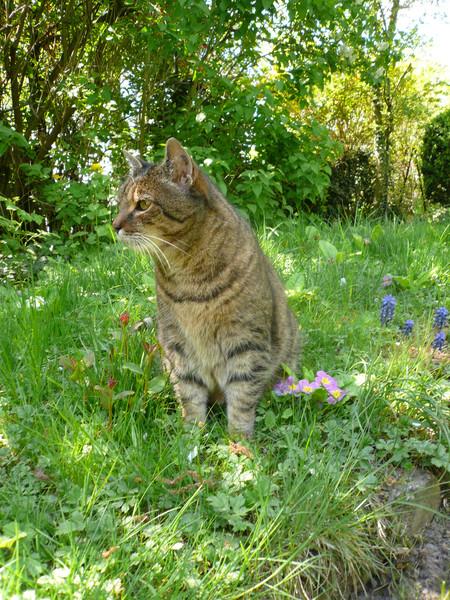 Max enjoys the garden in Stuttgart