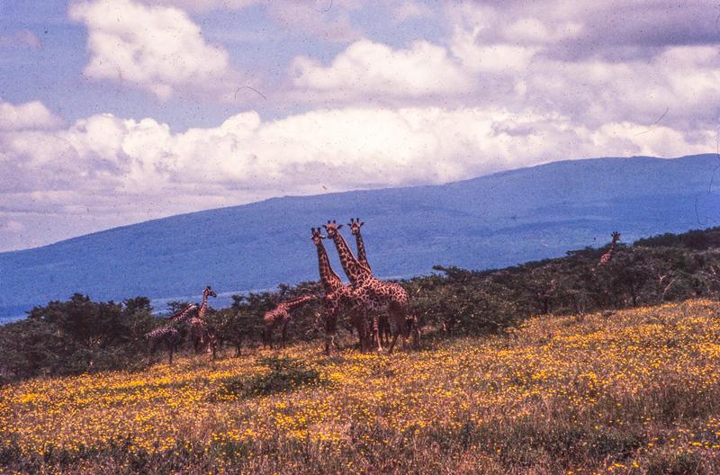 1995-127.jpg