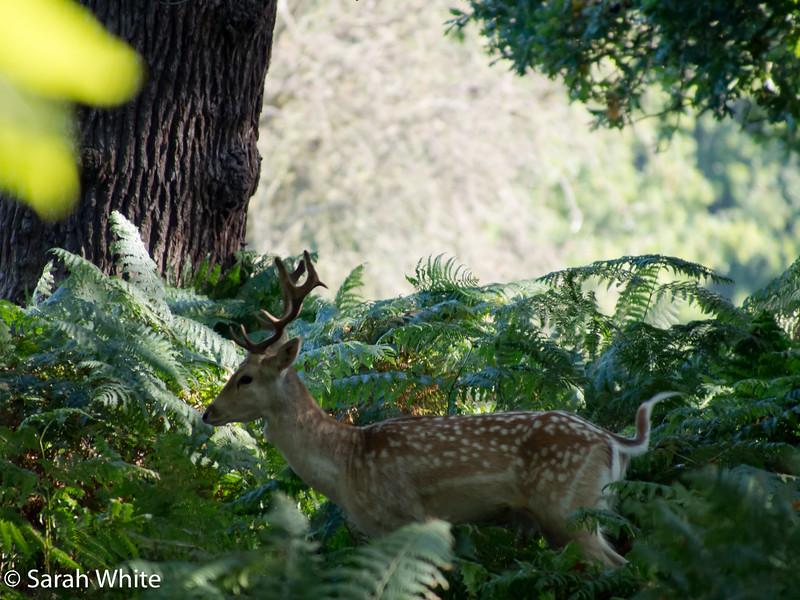 Deer rut_260915_642.jpg