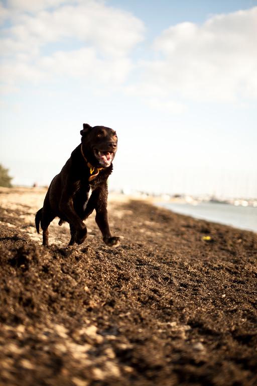 Dogsonbeach-AlexanderGardner-0006-20100614