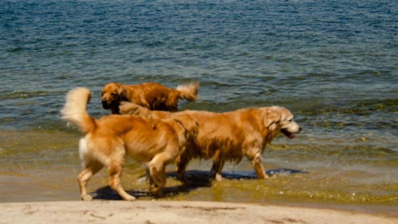 PuppyParty18-114.jpg