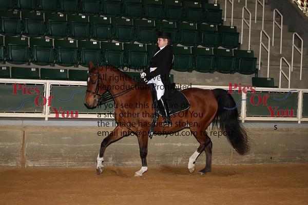 351 PB Sport Horse Show Hack Championship