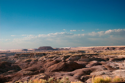 Painted Dessert & Petrified Forest