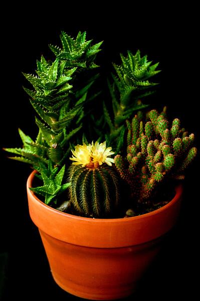 Cacti 060520-.jpg