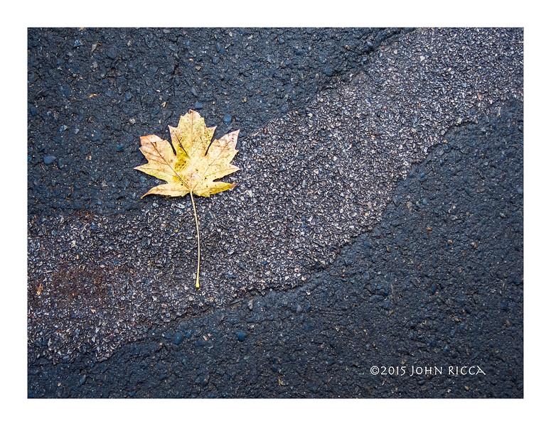 Leaf on Road.jpg