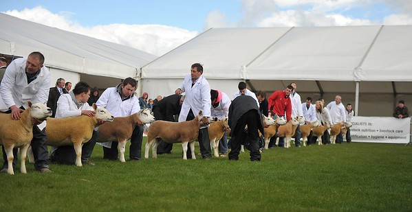 Royal Ulster Agricultural Show 2013