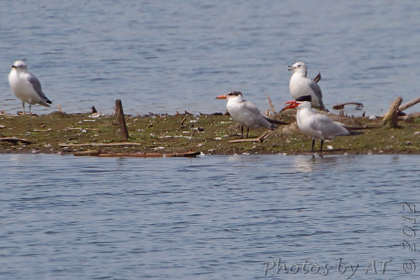2012-09-04 Riverlands Migratory Bird Sanctuary