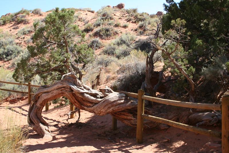 20080908-081 - Arches NP - 69 On Devil's Garden Trail.JPG