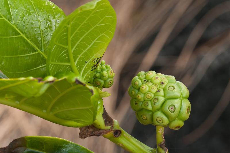 Garden Buds