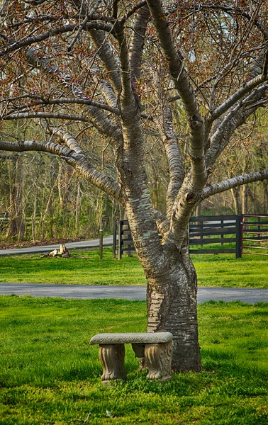 Tree and Bench S44A3425.jpg