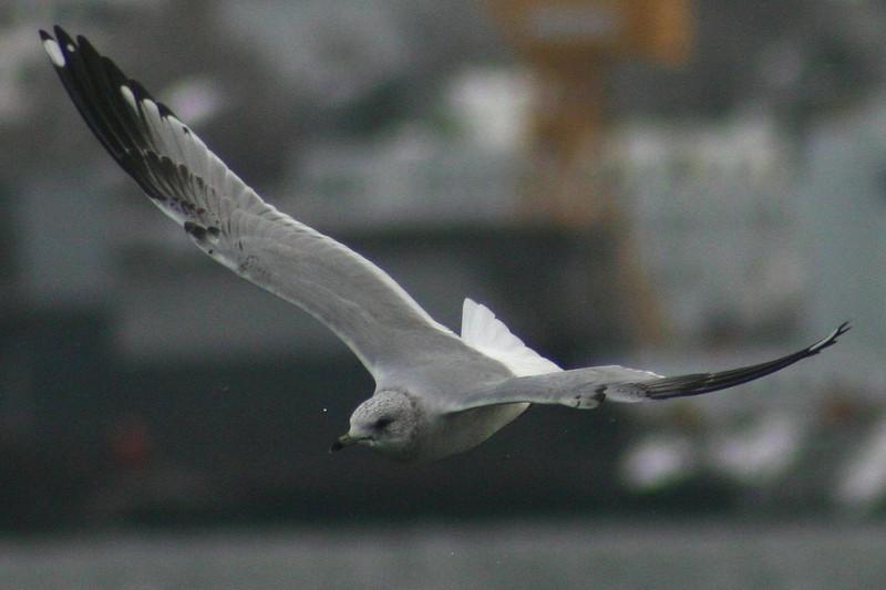 Tufts Cove,February 28th,2012