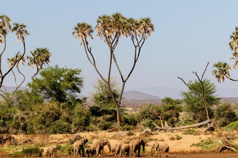 Kenya 2015-01617.jpg