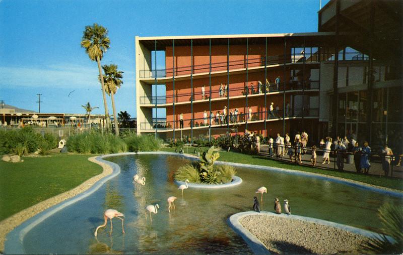 Flamingo and Penguin Pool