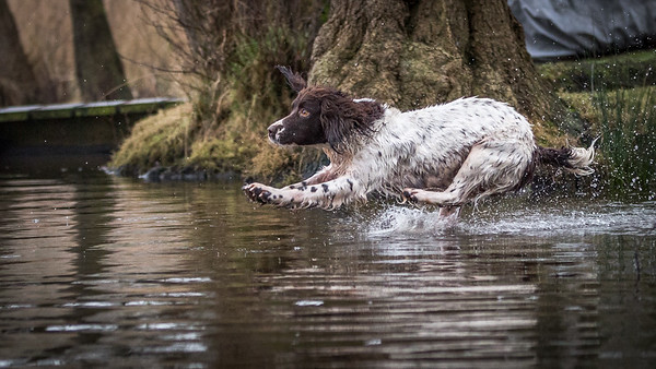 Dog in action