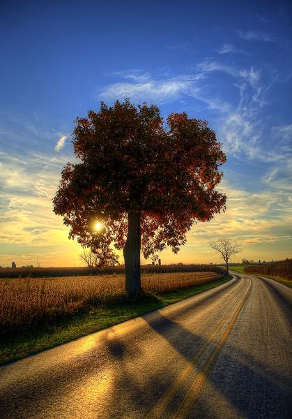 autumn - amishtown road tree(p).jpg
