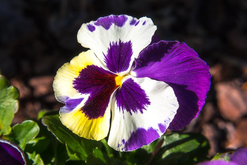 160417_6321 Flowers_30-1.jpg