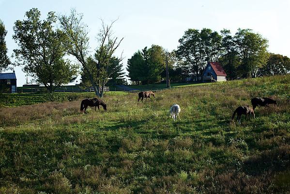 Our Backyard Oct 2011