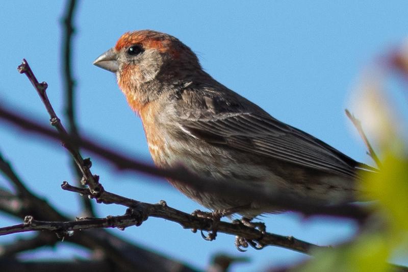 bird-9895.jpg