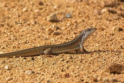 Crocodiles , Terrapins &  Reptiles