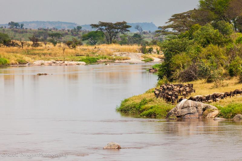 2_North_Serengeti-5.jpg