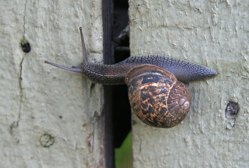 3206 Snail.jpg