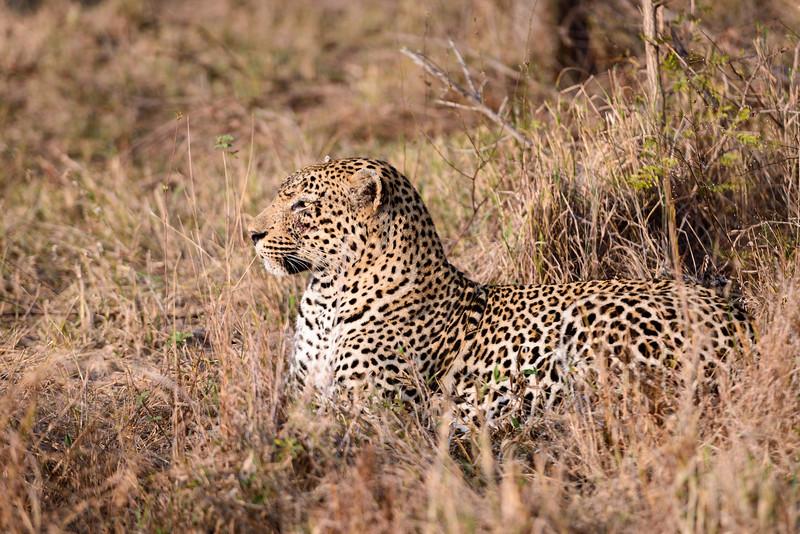 LeopardHills-20130826-1045.jpg