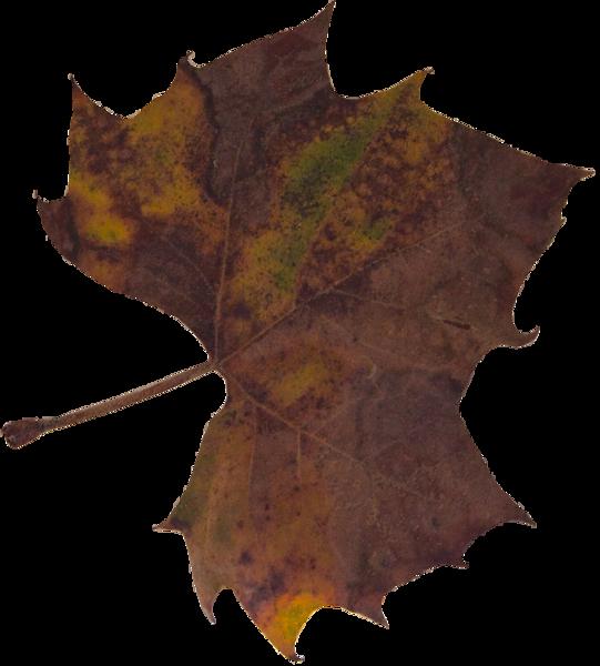 Leaf 32.png