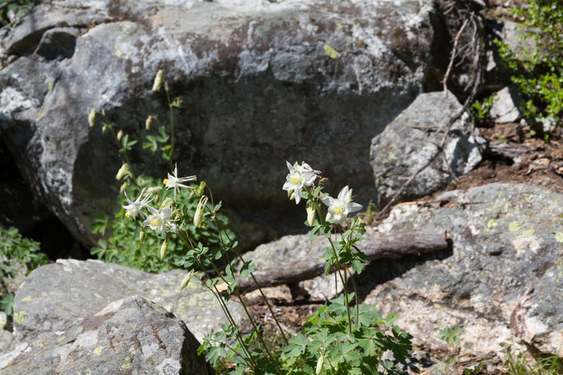 2011_07_07 Wyoming 091.jpg