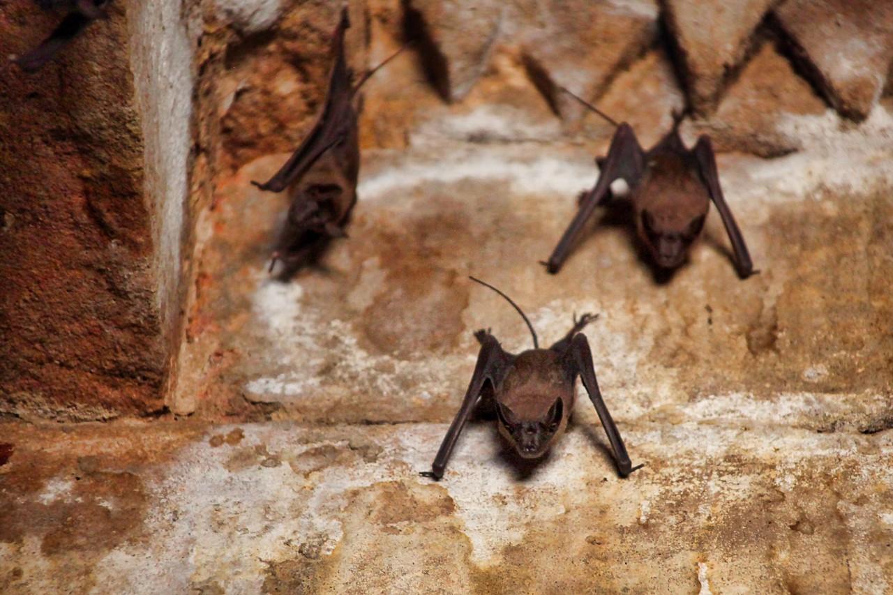 Ahmedabad India Sun Temple bats