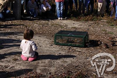 North`bobwhite quail release — Brewster, MA ♦ 10 . 31 - 2009