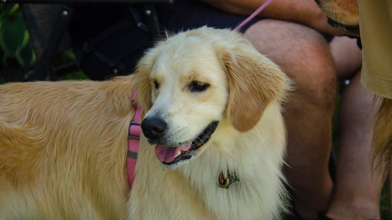 PuppyParty18-315.jpg