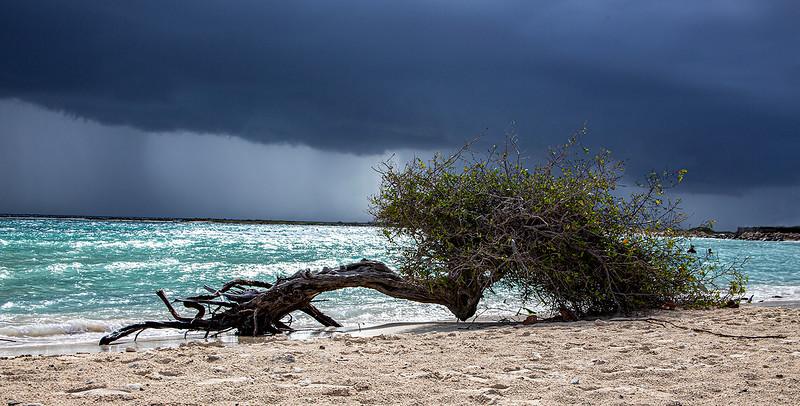 50. beach tree.jpg