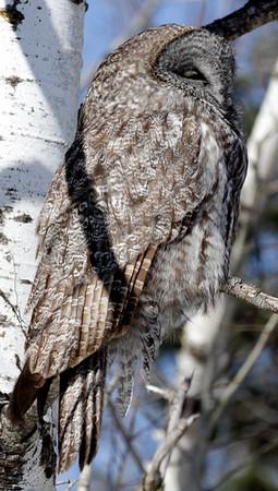2013 OWLS + - Duluth